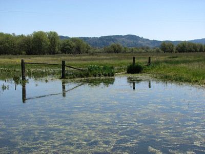 Little Lake Valley wetlands