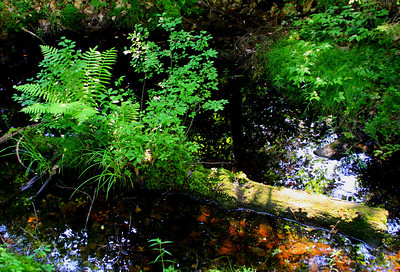 wetland log