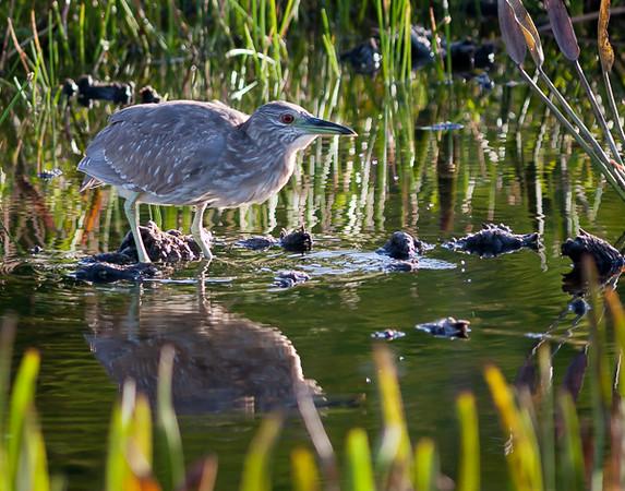 Wetlands-9934