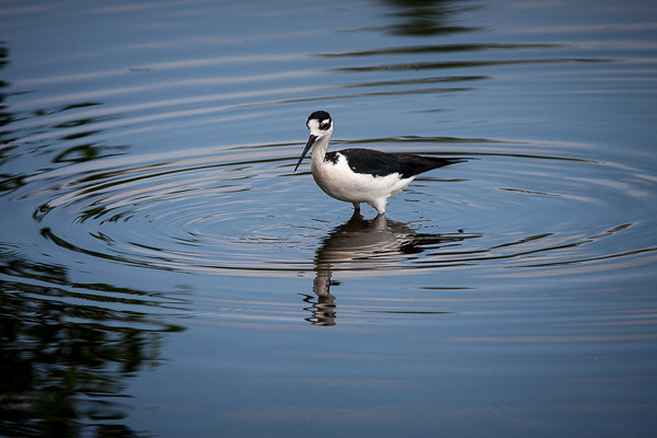 Wetlands-3752