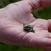 Small frog perches on a young child's palm.