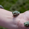 How many? This child has three tiny frogs on his arm!