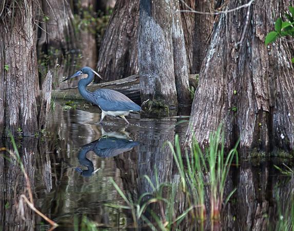 Wetlands--26