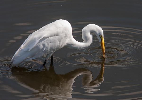 Wetlands-5593