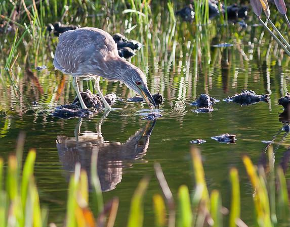 Wetlands-9930
