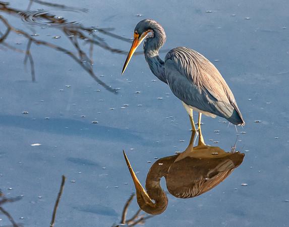 Wetlands--43