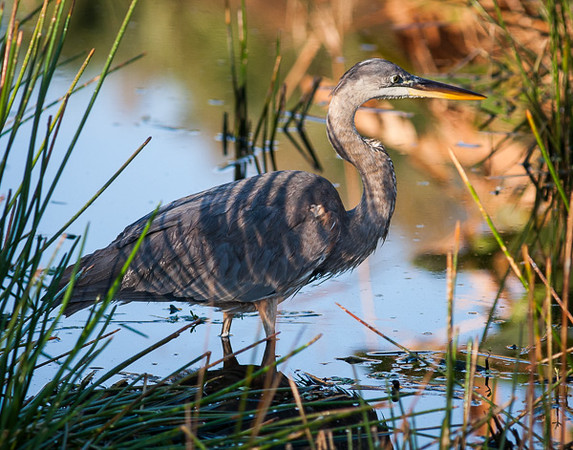 Wetlands-9351