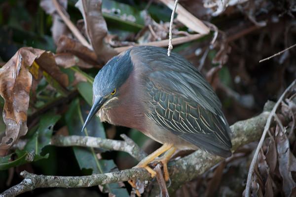 Wetlands-4444