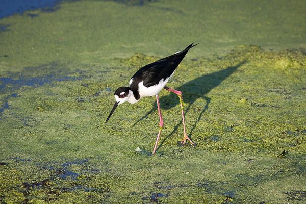 Wetlands-4336