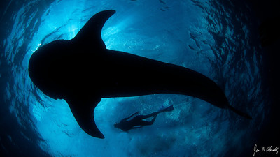 Jim Abernethy photo: Juliet and whale shark in silhouette (photo digitally altered by Peter to make it fit the format of a Facebook cover photo better).