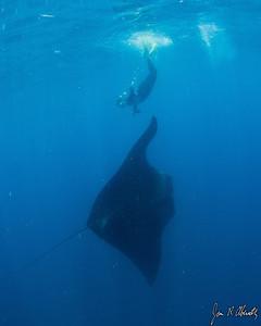Jim Abernethy photo: Kris and a manta ray.