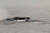Whale Watching-7004779