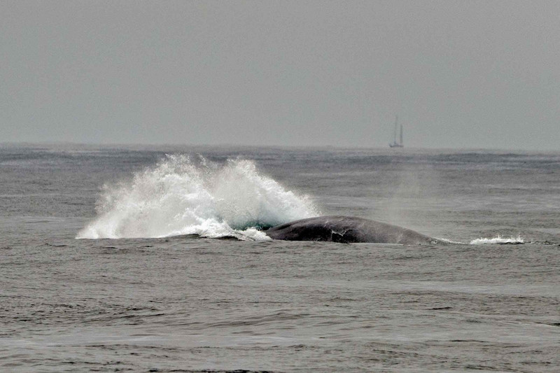 Whale Watching-