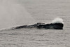 Whale Watching-7004774