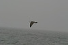 Whale_Watching_Jul_2012_0175