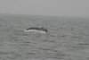Whale_Watching_Jul_2012_0179