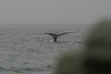 Whale_Watching_Jul_2012_0112