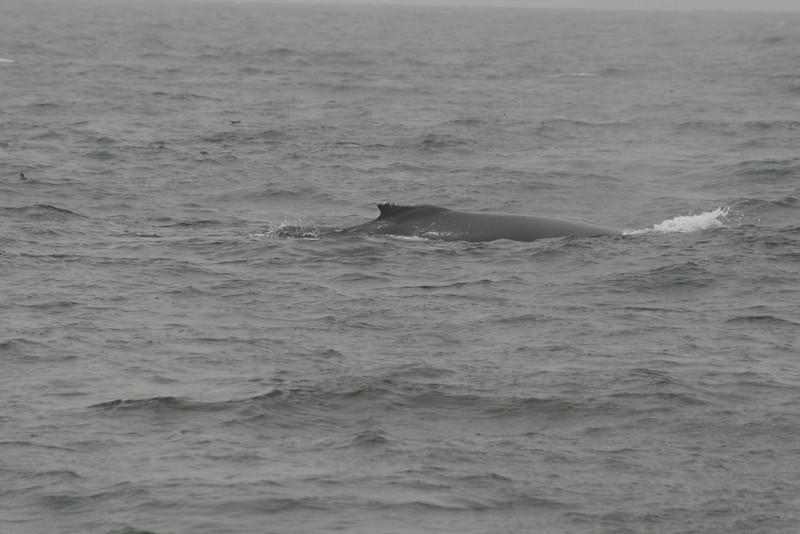 Whale_Watching_Jul_2012_0215