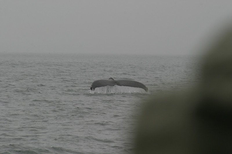 Whale_Watching_Jul_2012_0111