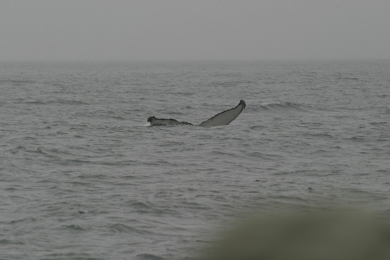 Whale_Watching_Jul_2012_0113
