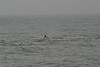 Whale_Watching_Jul_2012_0150