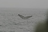 Whale_Watching_Jul_2012_0121