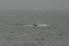 Whale_Watching_Jul_2012_0018