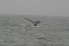 Whale_Watching_Jul_2012_0181