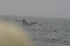 Whale_Watching_Jul_2012_0168