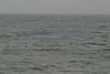 Whale_Watching_Jul_2012_0090