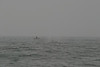 Whale_Watching_Jul_2012_0142