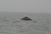 Whale_Watching_Jul_2012_0116
