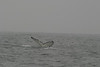 Whale_Watching_Jul_2012_0182