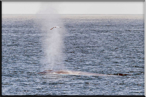 Whale Watching July 23, 2012
