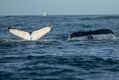 Whale Watching Moss Landing