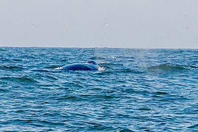 20210629-Whales and Dolphins 6-29-21Z62_2529