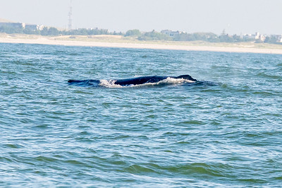 20210629-Whales and Dolphins 6-29-21Z62_2473