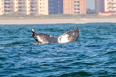 20210629-Whales and Dolphins 6-29-21Z62_2466
