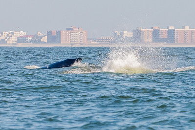 20210629-Whales and Dolphins 6-29-21Z62_2515