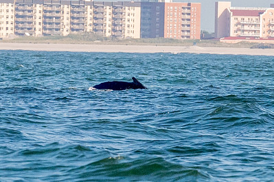 20210629-Whales and Dolphins 6-29-21Z62_2459
