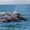 Baja whale trip, 2012