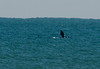 The photos of the Right Whale was taken off of Satellite Beach, Florida.