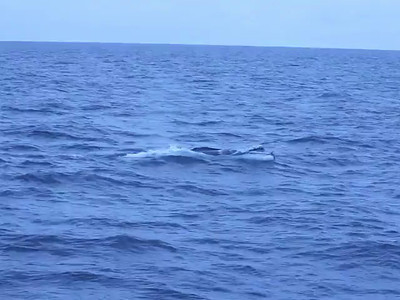 Finwhale surfacing