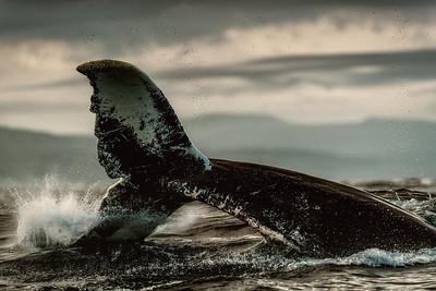 Whale Tail Drama