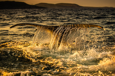 Golden light hits a Whale Tail