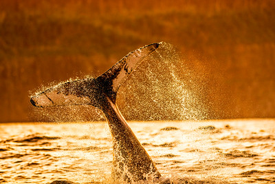 Water Spray Whale Tail