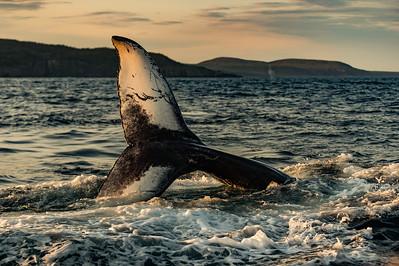 Sun lit Whale Tail