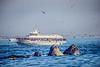 The Princess Monterey and Lunge Feeding Humpbacks