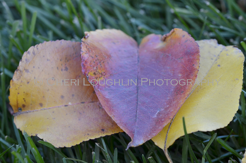 Heart Leaves 047