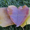 Heart Leaves 047